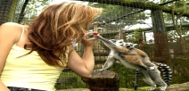 Feed the Lemurs