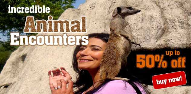 Incredible Animal Encounters