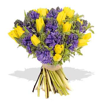 Blue Hyacinths with Yellow Tulips